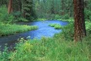 Metolius River web