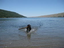 Porkchop in Wallowa Lake 225x